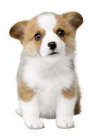 Brawl Sticker Welsh Corgi (Nintendogs).png