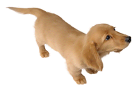Brawl Sticker Miniature Dachshund (Nintendogs).png