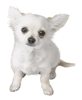 Brawl Sticker Chihuahua (Nintendogs).png